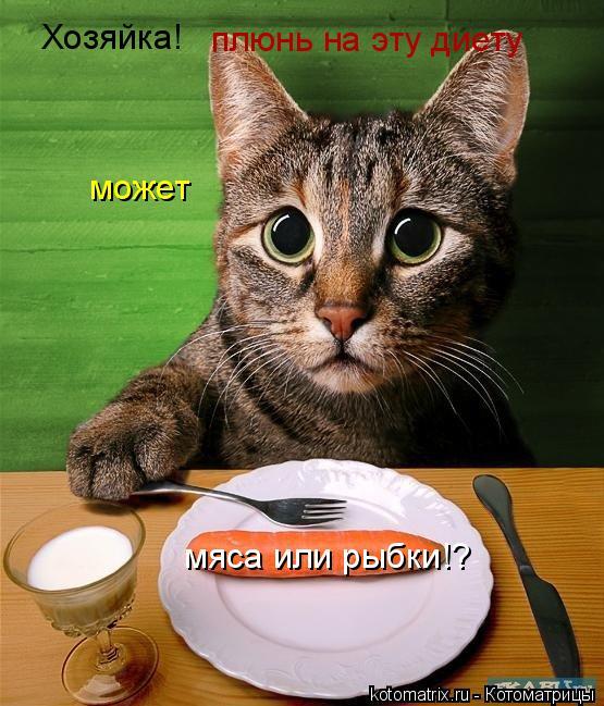 Котоматрица: Хозяйка! плюнь на эту диету может  мяса или рыбки!?