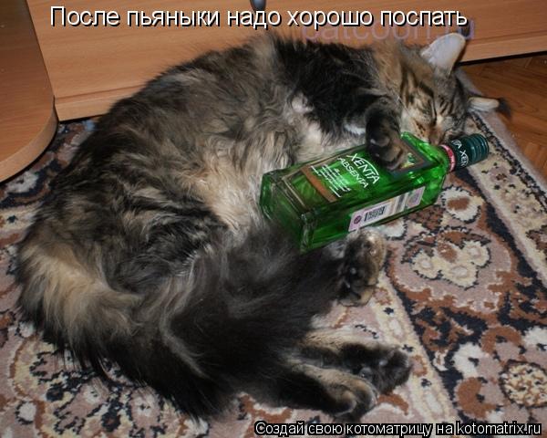 Котоматрица: После пьяныки надо хорошо поспать