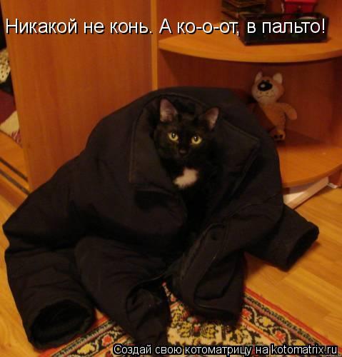 Котоматрица: Никакой не конь. А ко-о-от, в пальто!