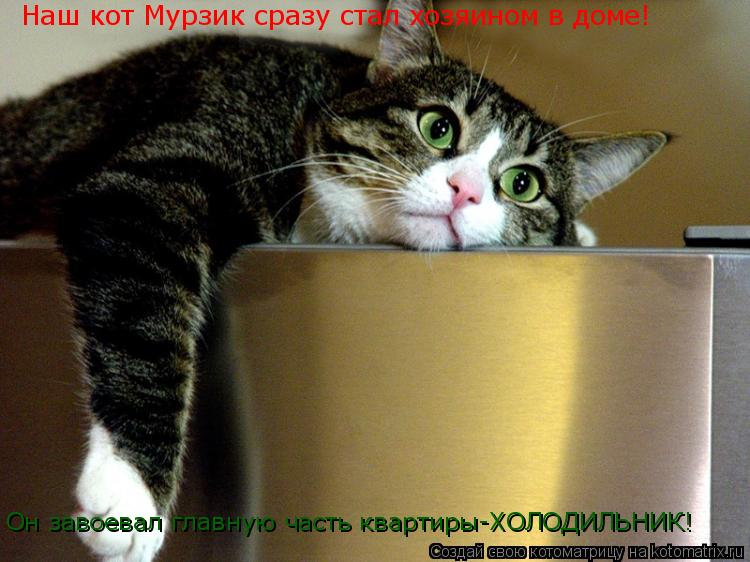 Котоматрица: Наш кот Мурзик сразу стал хозяином в доме! Он завоевал главную часть квартиры-ХОЛОДИЛЬНИК!