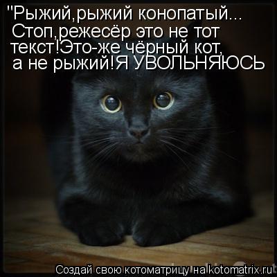 """Котоматрица: """"Рыжий,рыжий конопатый... Стоп,режесёр это не тот текст!Это-же чёрный кот, а не рыжий!Я УВОЛЬНЯЮСЬ"""