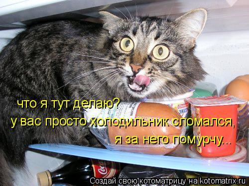 Котоматрица: что я тут делаю? у вас просто холодильник сломался, я за него помурчу...