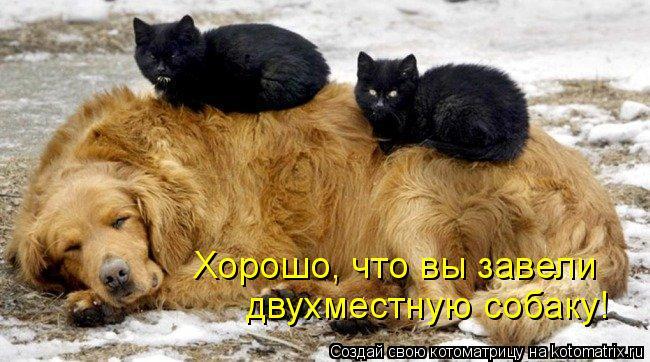 Котоматрица: Хорошо, что вы завели двухместную собаку!