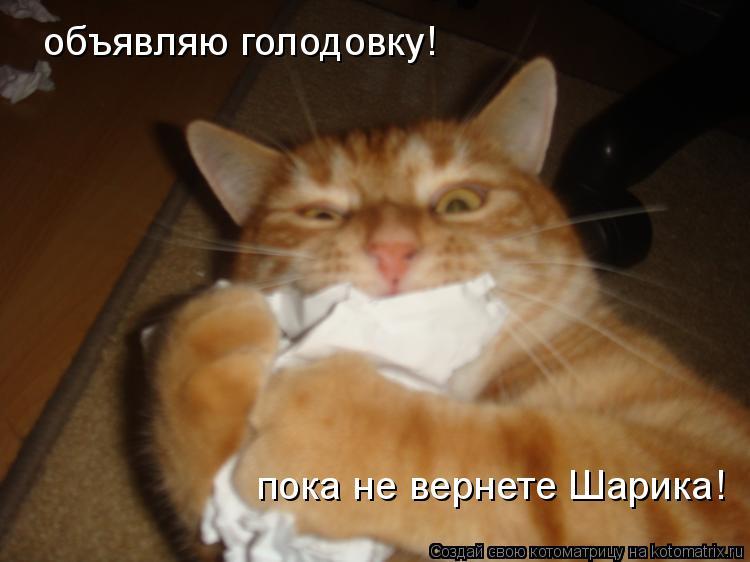 Котоматрица: объявляю голодовку! пока не вернете Шарика!