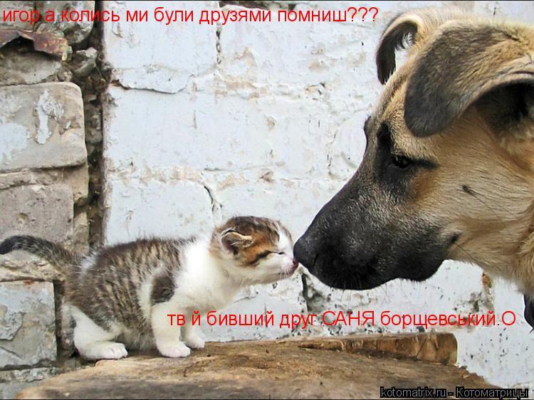 Котоматрица: игор а колись ми були друзями помниш??? твій бивший друг САНЯ борщевський.О