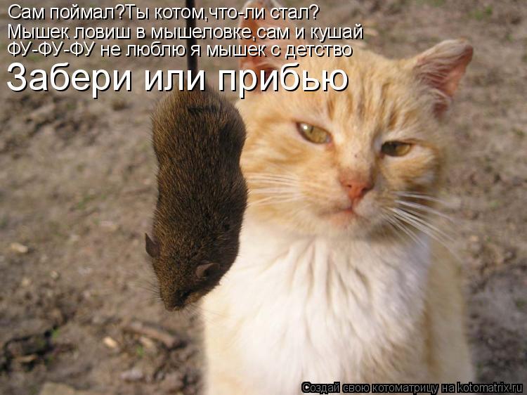 Котоматрица: Сам поймал?Ты котом,что-ли стал? Мышек ловиш в мышеловке,сам и кушай ФУ-ФУ-ФУ не люблю я мышек с детство Забери или прибью