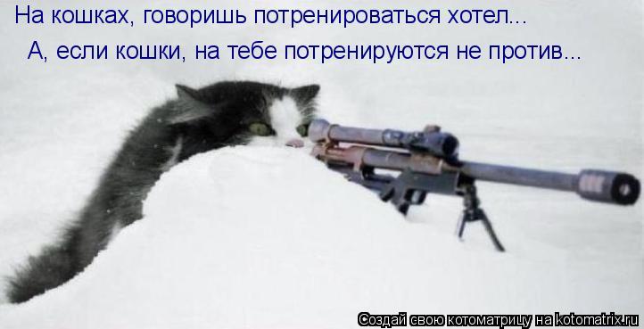 Котоматрица: На кошках, говоришь потренироваться хотел...  А, если кошки, на тебе потренируются не против...