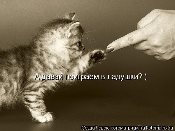 Котоматрица: А давай поиграем в ладушки? )