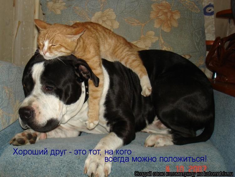 Котоматрица: Хороший друг - это тот, на кого  всегда можно положиться!
