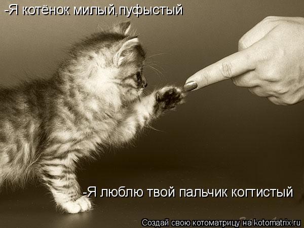 Котоматрица: -Я котёнок милый,пуфыстый -Я люблю твой пальчик когтистый