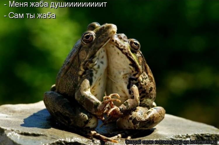 Котоматрица: - Сам ты жаба - Меня жаба душииииииииит