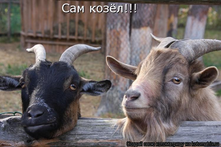 Котоматрица: Сам козёл!!!