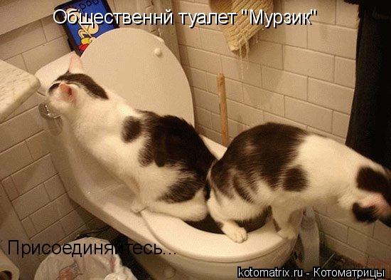 """Котоматрица: Общественнй туалет """"Мурзик"""" Присоединяйтесь..."""