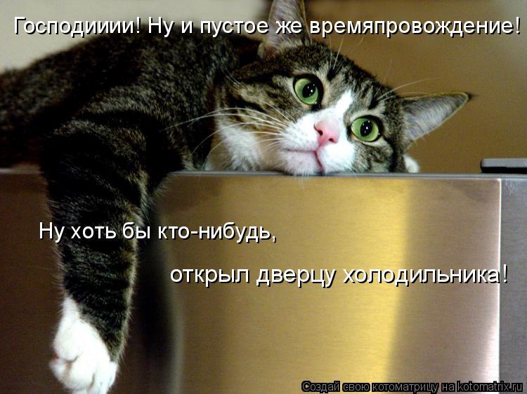 Котоматрица: Господииии! Ну и пустое же времяпровождение! Ну хоть бы кто-нибудь, открыл дверцу холодильника!