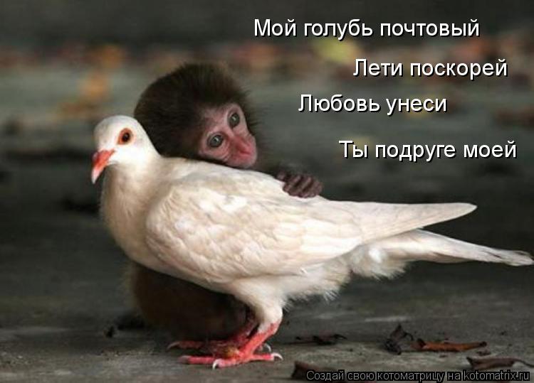 Котоматрица: Мой голубь почтовый  Лети поскорей Любовь унеси Ты подруге моей
