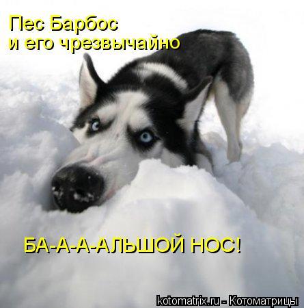 Котоматрица: Пес Барбос и его чрезвычайно БА-А-А-АЛЬШОЙ НОС!