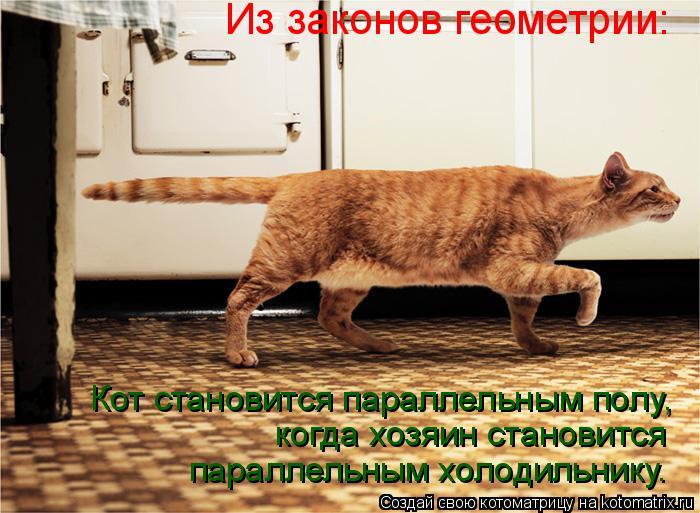 Котоматрица: Кот становится параллельным полу, когда хозяин становится  параллельным холодильнику. Из законов геометрии: