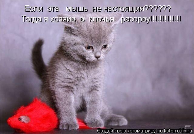 Котоматрица: Если  эта   мышь  не настоящия?????? Тогда я хозяив  в  клочья   разорву!!!!!!!!!!!!!