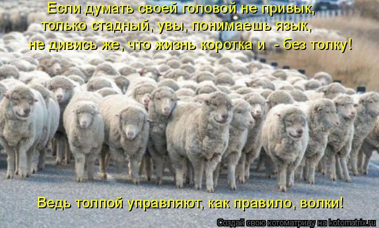 Котоматрица: Если думать своей головой не привык, только стадный, увы, понимаешь язык, не дивись же, что жизнь коротка и  - без толку! Ведь толпой управляют