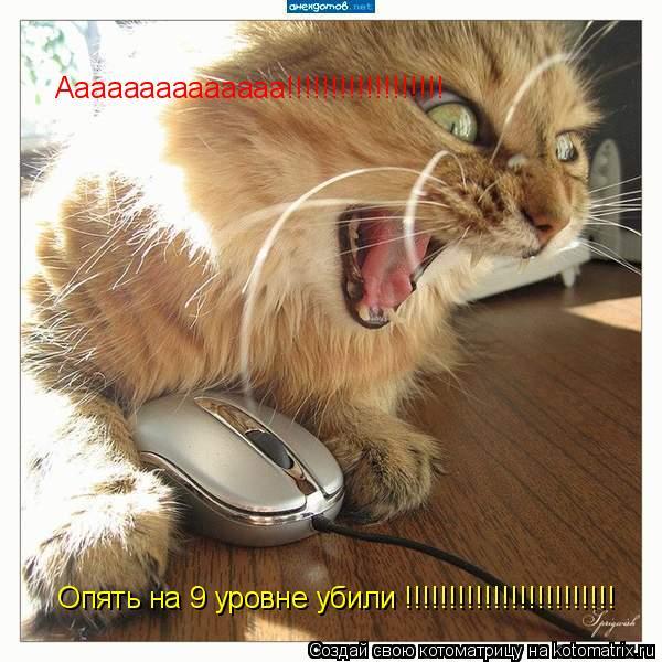 Котоматрица: Аааааааааааааа!!!!!!!!!!!!!!!!!!  Опять на 9 уровне убили !!!!!!!!!!!!!!!!!!!!!!!!