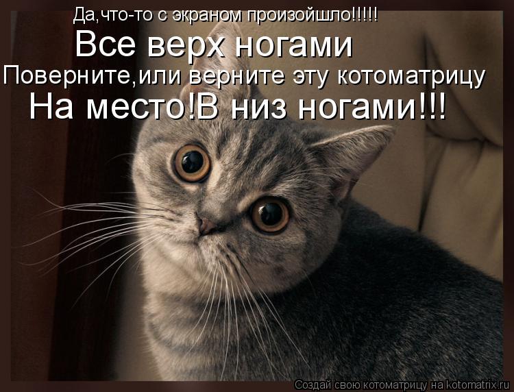 Котоматрица: Да,что-то с экраном произойшло!!!!! Все верх ногами Поверните,или верните эту котоматрицу На место!В низ ногами!!!