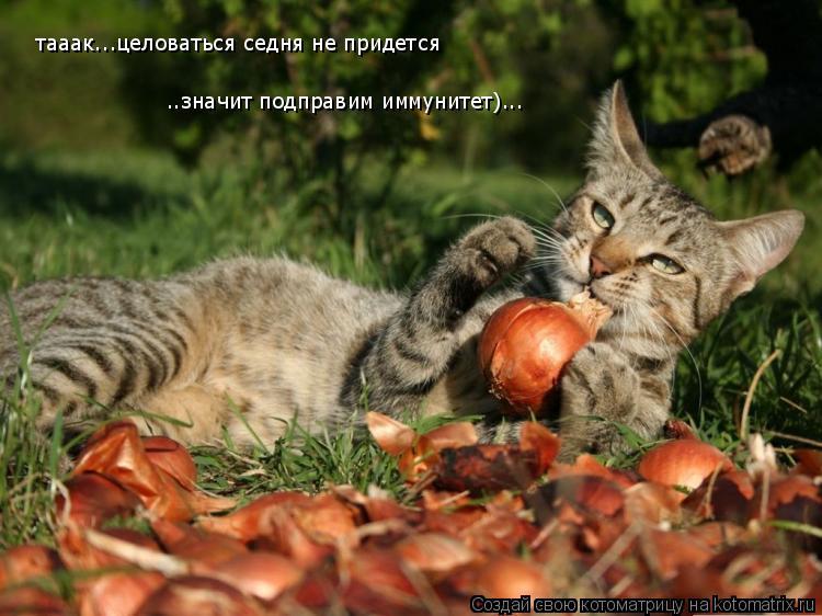 Котоматрица: тааак...целоваться седня не придется тааак...целоваться седня не придется ..значит подправим иммунитет)...