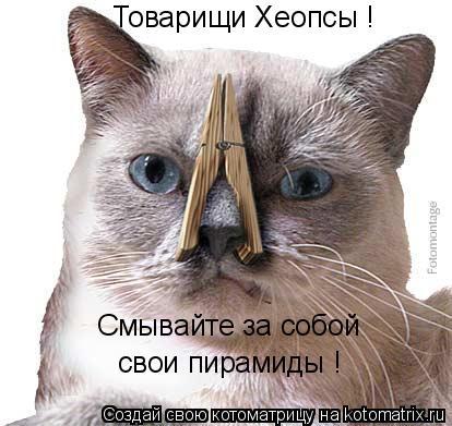 Котоматрица: Товарищи Хеопсы ! Смывайте за собой свои пирамиды !