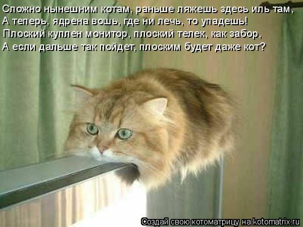 Котоматрица: Сложно нынешним котам, раньше ляжешь здесь иль там, А теперь, ядрена вошь, где ни лечь, то упадешь! Плоский куплен монитор, плоский телек, как