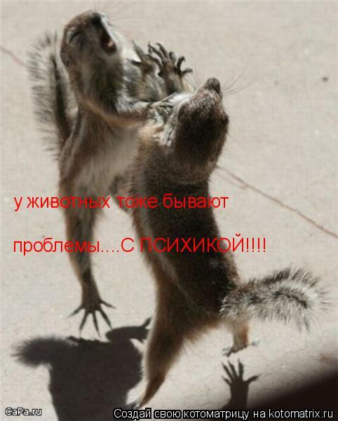 Котоматрица: у животных тоже бывают проблемы....С ПСИХИКОЙ!!!!