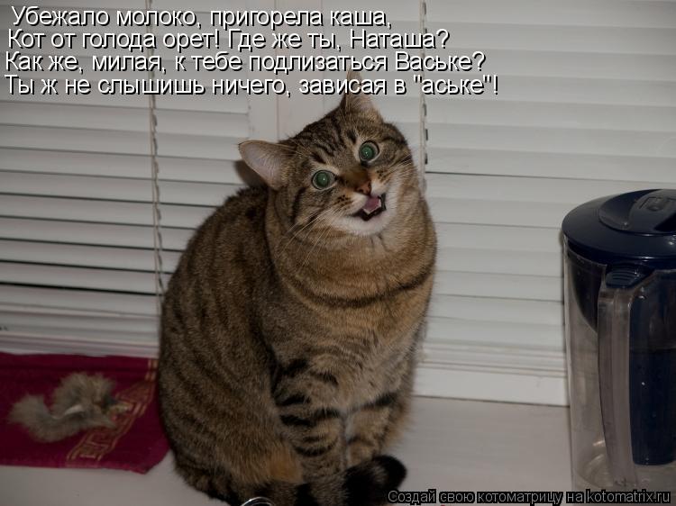 Котоматрица: Убежало молоко, пригорела каша, Кот от голода орет! Где же ты, Наташа? Как же, милая, к тебе подлизаться Ваське? Ты ж не слышишь ничего, зависая