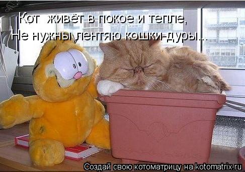 Котоматрица: Кот  живёт в покое и тепле, Не нужны лентяю кошки-дуры...