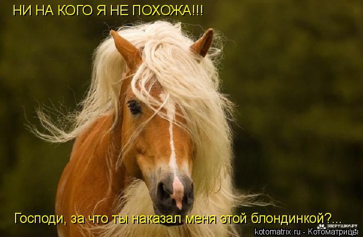 Котоматрица: НИ НА КОГО Я НЕ ПОХОЖА!!! Господи, за что ты наказал меня этой блондинкой?...