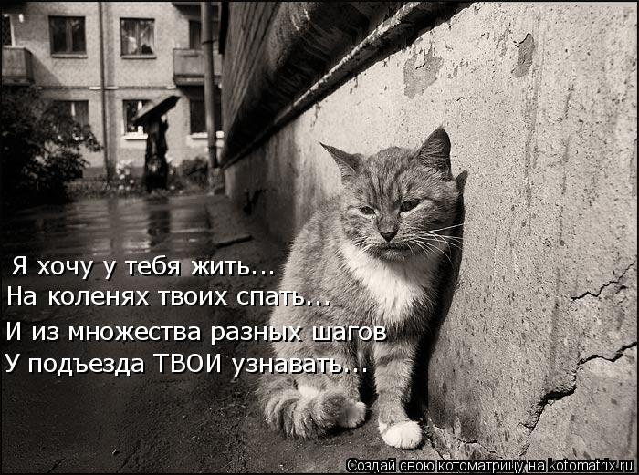 Котоматрица: Я хочу у тебя жить... На коленях твоих спать... И из множества разных шагов У подъезда ТВОИ узнавать...