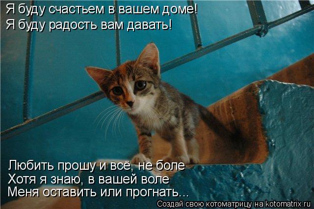 Котоматрица: Я буду счастьем в вашем доме! Я буду радость вам давать! Любить прошу и всё, не боле Хотя я знаю, в вашей воле Меня оставить или прогнать...