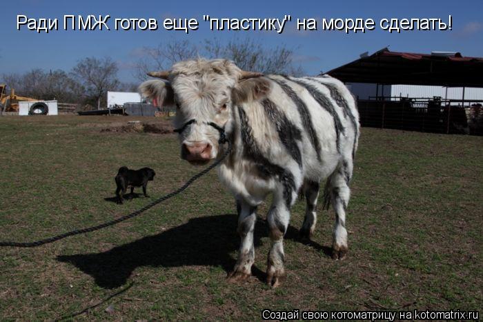 """Котоматрица: Ради ПМЖ готов еще """"пластику"""" на морде сделать!"""