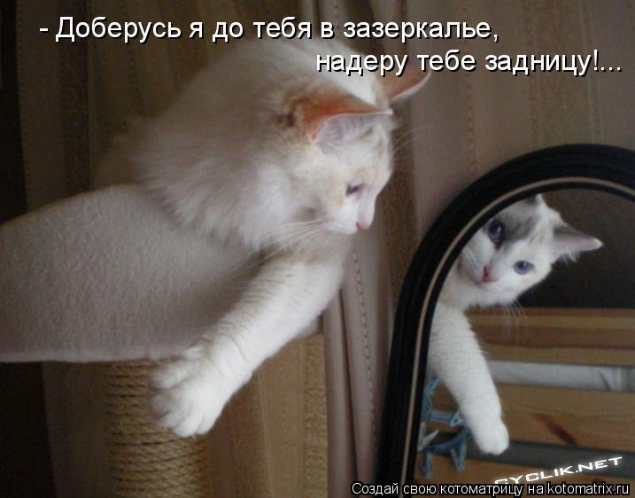 Котоматрица: - Доберусь я до тебя в зазеркалье, надеру тебе задницу!...