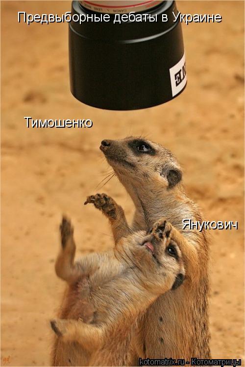 Котоматрица: Тимошенко Янукович Предвыборные дебаты в Украине
