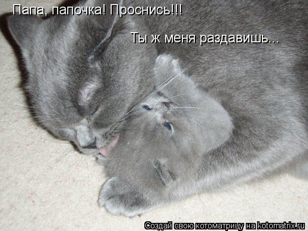 Котоматрица: Папа, папочка! Проснись!!! Ты ж меня раздавишь...
