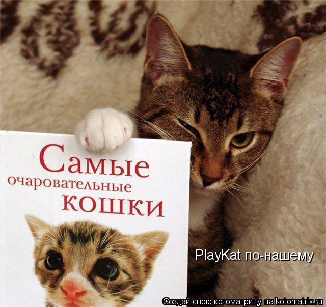 Котоматрица: PlayKat по-нашему