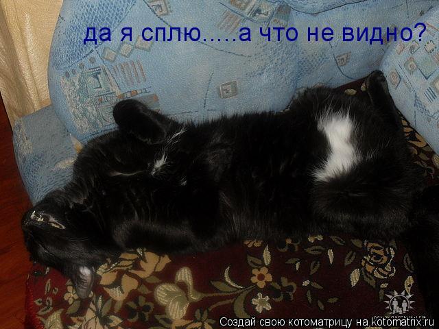 Котоматрица: да я сплю.....а что не видно?