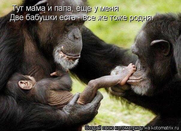 Котоматрица: Тут мама и папа, еще у меня Две бабушки есть - все же тоже родня.