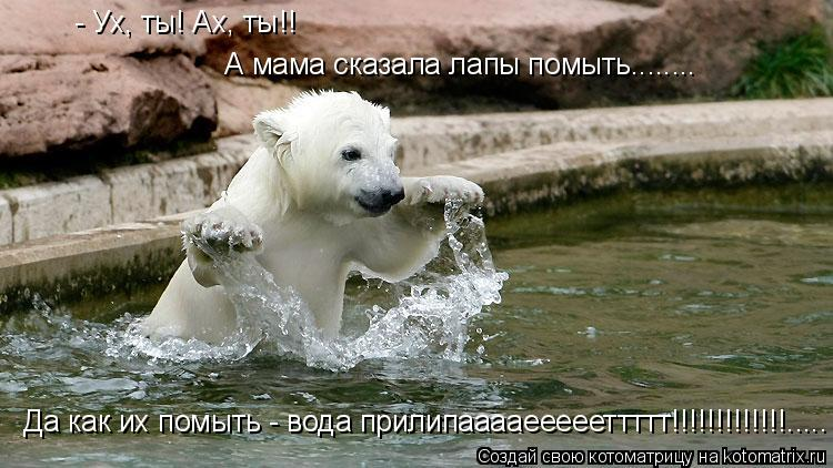 Котоматрица: А мама сказала лапы помыть........ - Ух, ты! Ах, ты!!  Да как их помыть - вода прилипааааеееееттттт!!!!!!!!!!!!!.....