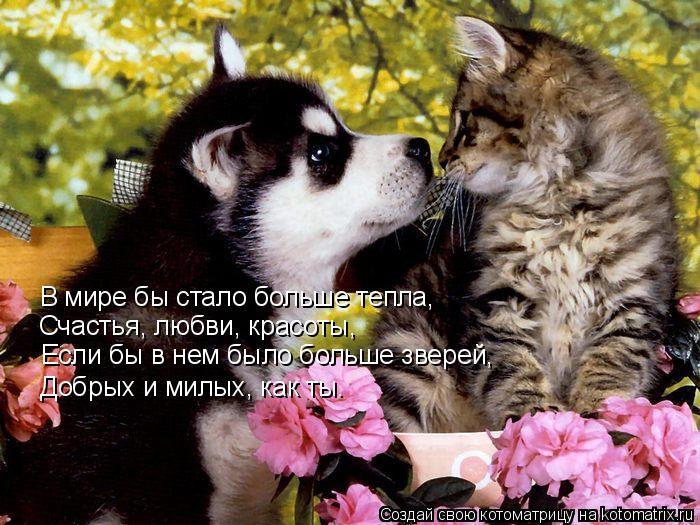 Котоматрица: В мире бы стало больше тепла, Счастья, любви, красоты, Если бы в нем было больше зверей, Добрых и милых, как ты.