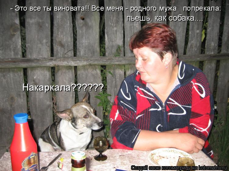 Котоматрица: пьешь, как собака.... Накаркала?????? - Это все ты виновата!! Все меня - родного мужа   попрекала: