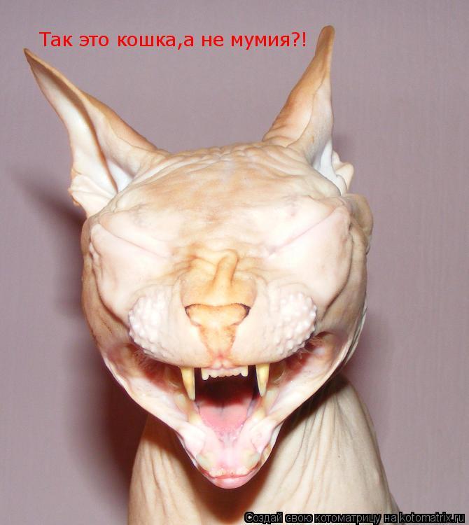 Котоматрица: Так это кошка,а не мумия?!