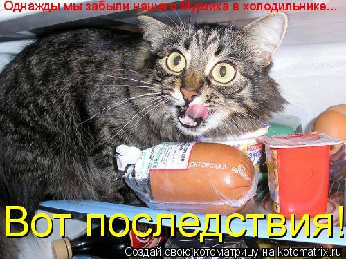 Котоматрица: Однажды мы забыли нашего Мурзика в холодильнике... Вот последствия!