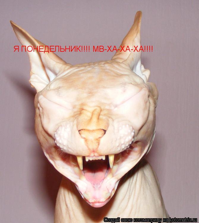 Котоматрица: Я ПОНЕДЕЛЬНИК!!!! МВ-ХА-ХА-ХА!!!!