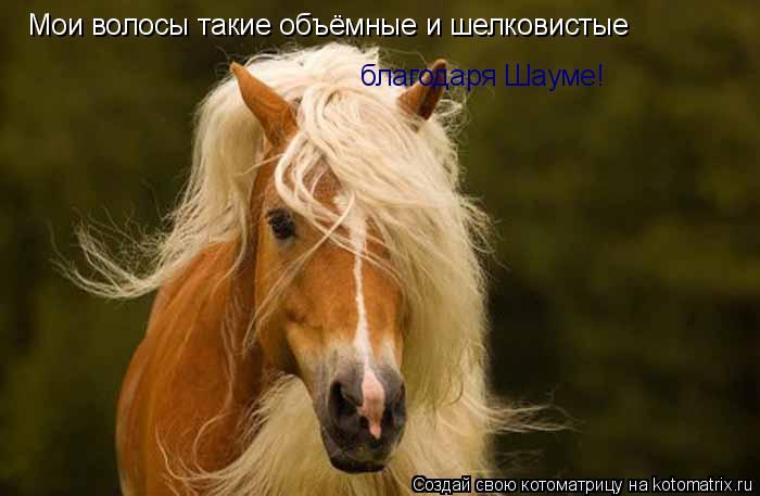 Котоматрица: Мои волосы такие объёмные и шелковистые благодаря Шауме!