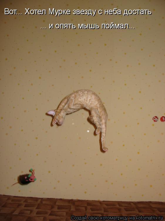 Котоматрица: Вот... Хотел Мурке звезду с неба достать ... и опять мышь поймал...