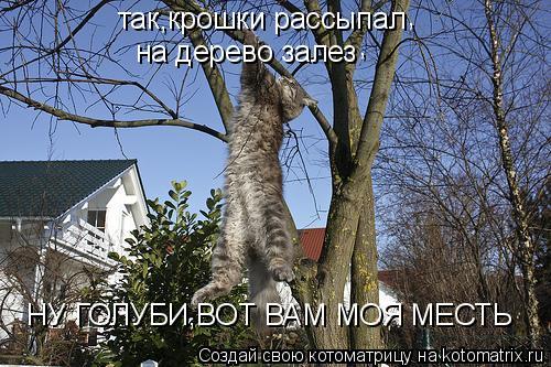 Котоматрица: так,крошки рассыпал на дерево залез НУ ГОЛУБИ,ВОТ ВАМ МОЯ МЕСТЬ , ,